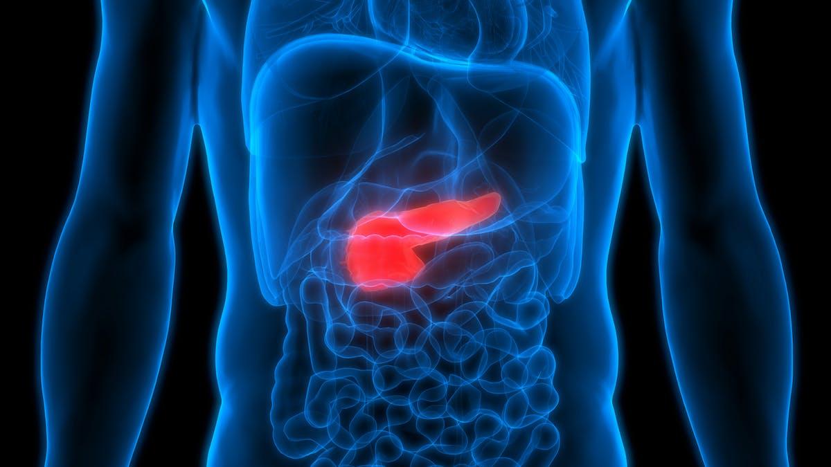 Pancrés anatomie ventre abdomen