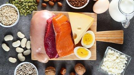 À quoi servent les protéinesprésentes dans l'alimentation ?