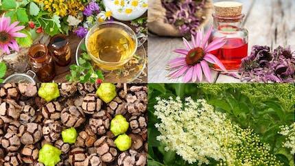 Les plantes qui renforcent notre immunité