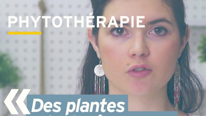 Quelles plantes pour lutter contre le stress ? Réponse en vidéo