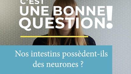 Nos intestins possèdent-ils des neurones ? (Vidéo)